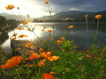 キバナコスモス咲く広沢池