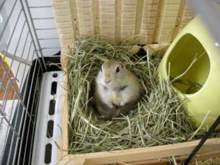 f:id:usa-kounosuke:20080906140128j:image