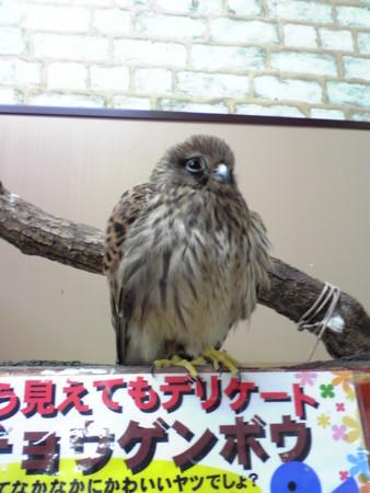 f:id:usa-kounosuke:20081010194008j:image