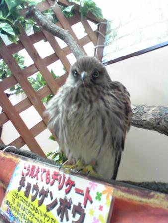 f:id:usa-kounosuke:20081010194056j:image