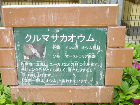 f:id:usa-kounosuke:20090430110024j:image