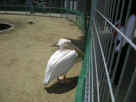 f:id:usa-kounosuke:20090430115111j:image