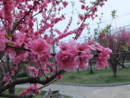 f:id:usa-kounosuke:20100322175706j:image:w360