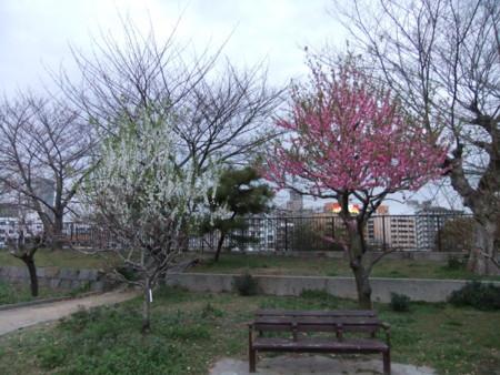 f:id:usa-kounosuke:20100322180251j:image:w360