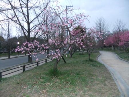 f:id:usa-kounosuke:20100322180303j:image:w360