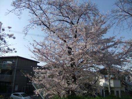 f:id:usa-kounosuke:20100404155924j:image:w360