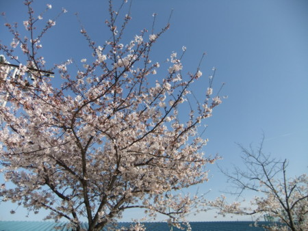 f:id:usa-kounosuke:20100404160031j:image:w360
