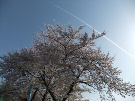 f:id:usa-kounosuke:20100404160205j:image:w360