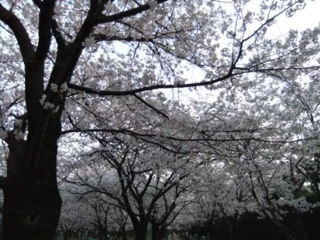 f:id:usa-kounosuke:20100404181701j:image:w360