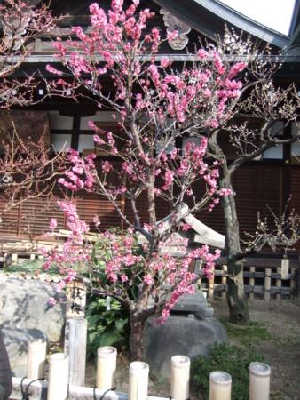 f:id:usa-kounosuke:20110227145844j:image:h360