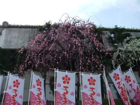 f:id:usa-kounosuke:20110227150133j:image:w360