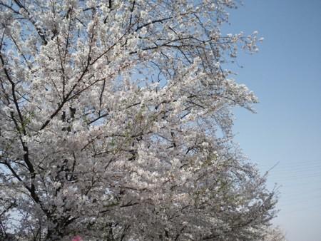f:id:usa-kounosuke:20110410145656j:image:w360