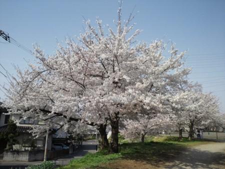 f:id:usa-kounosuke:20110410145749j:image:w360