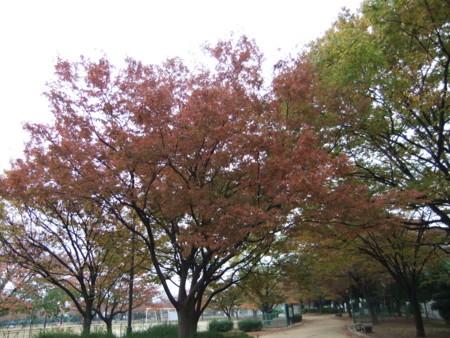 f:id:usa-kounosuke:20111123152202j:image:w360