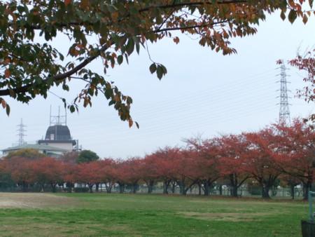 f:id:usa-kounosuke:20111123152641j:image:w360