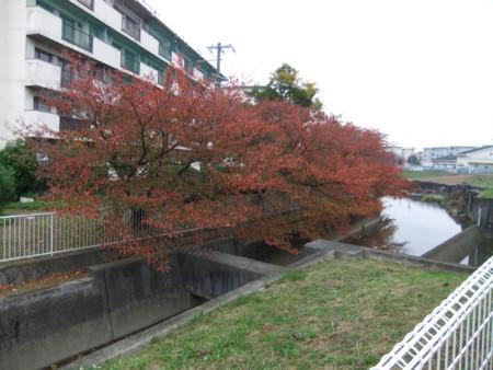 f:id:usa-kounosuke:20111123153910j:image:w360