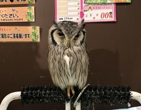 f:id:usa-kounosuke:20190809110945j:image