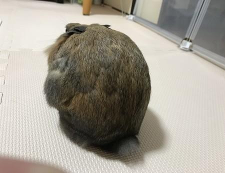 f:id:usa-kounosuke:20200107233727j:image