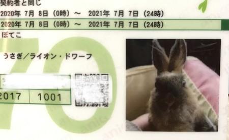 f:id:usa-kounosuke:20200620173727j:image