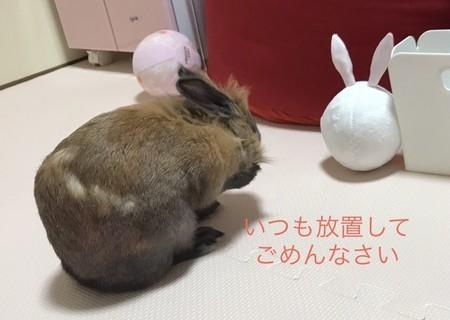 f:id:usa-kounosuke:20201207110920j:image