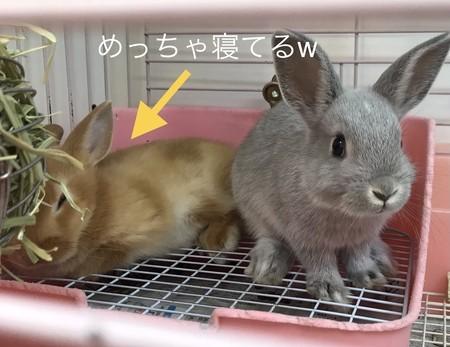 f:id:usa-kounosuke:20201230143359j:image