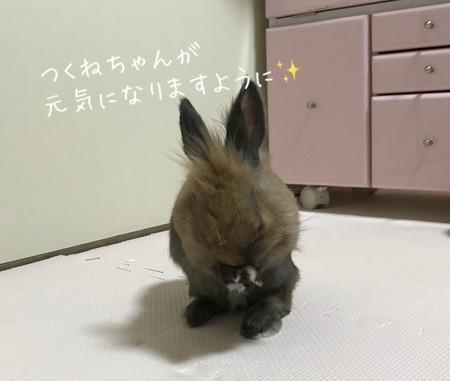 f:id:usa-kounosuke:20210324112954j:image