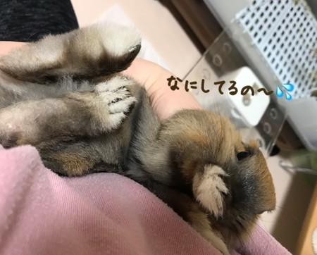 f:id:usa-kounosuke:20210326103419j:image