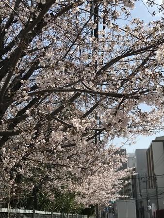 f:id:usa-kounosuke:20210326112121j:image