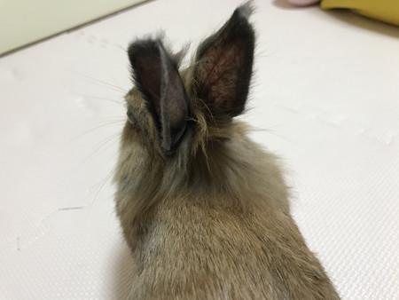 f:id:usa-kounosuke:20210409075058j:image