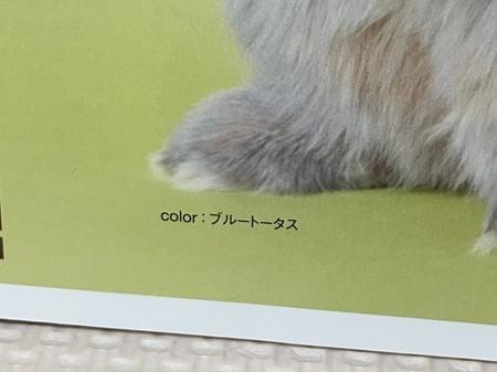 f:id:usa-kounosuke:20210508144120j:image