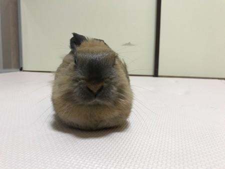 f:id:usa-kounosuke:20210514114023j:image