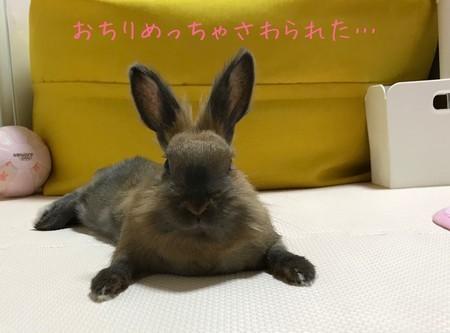 f:id:usa-kounosuke:20210518123945j:image