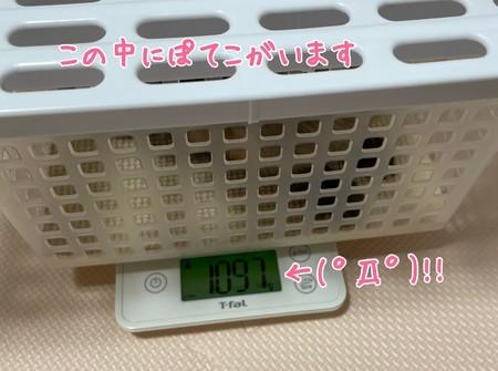 f:id:usa-kounosuke:20210617102903j:image