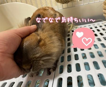f:id:usa-kounosuke:20210618102503j:image