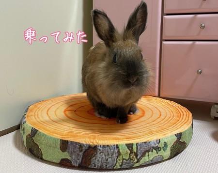 f:id:usa-kounosuke:20210621093526j:image