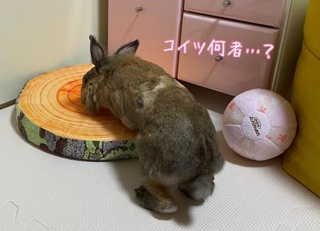 f:id:usa-kounosuke:20210621093536j:image