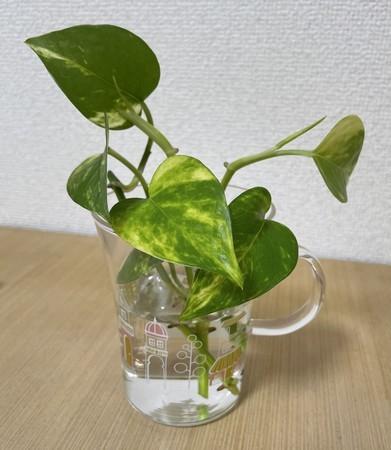 f:id:usa-kounosuke:20210701102718j:image