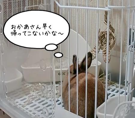 f:id:usa-kounosuke:20210702100157j:image