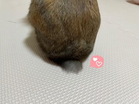 f:id:usa-kounosuke:20210702100232j:image