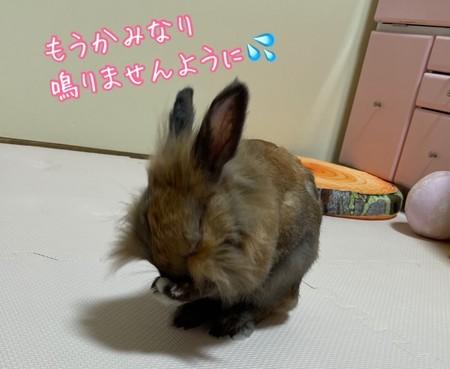 f:id:usa-kounosuke:20210715112958j:image