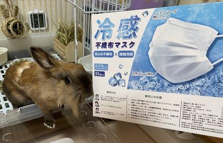 f:id:usa-kounosuke:20210720113833j:image