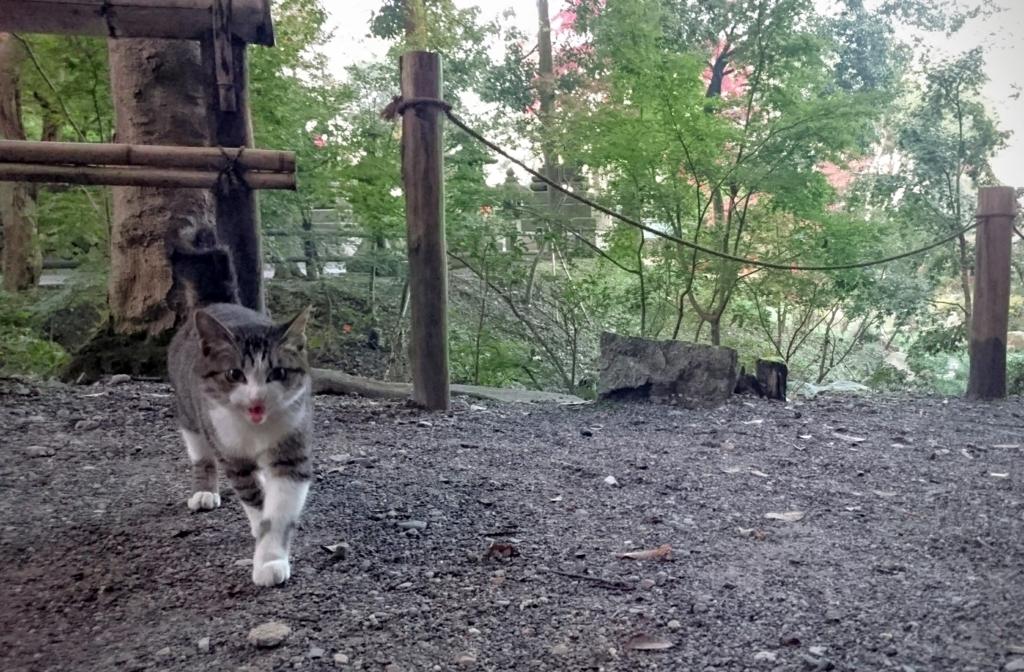 f:id:usacats:20161115145618j:plain