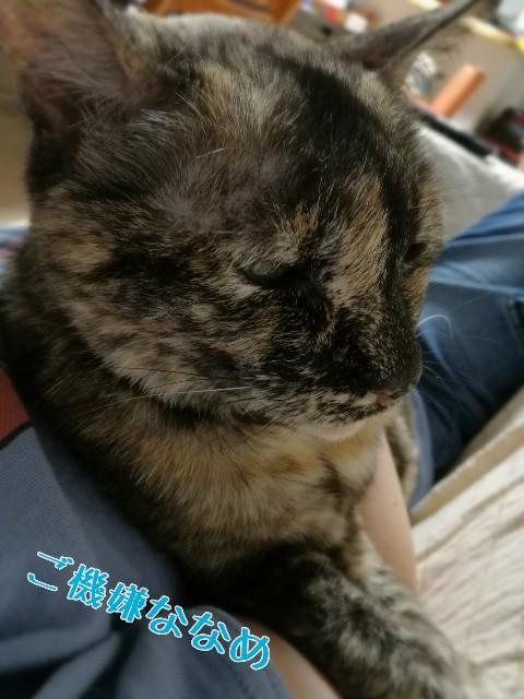 f:id:usafumi:20170605215356j:image
