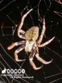[蜘蛛][生き物][虫][自然]夜の支配者