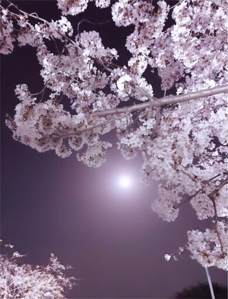 f:id:usagi-on-the-moon:20190406004538j:image