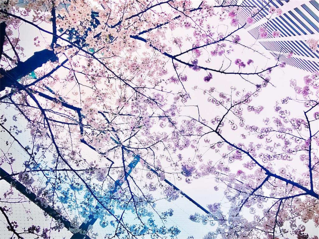 f:id:usagi_kanae:20170419110017j:image