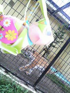 f:id:usagi_lantern:20110913115800j:image:w360