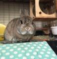 [ウサギ]ウサギ