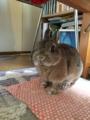[うさぎ][ウサギ]