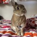 [ウサギ][bunny]